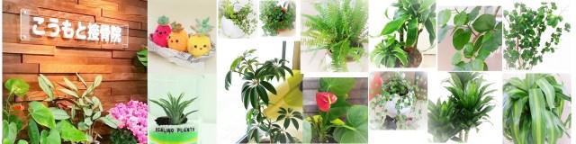 院内観葉植物3