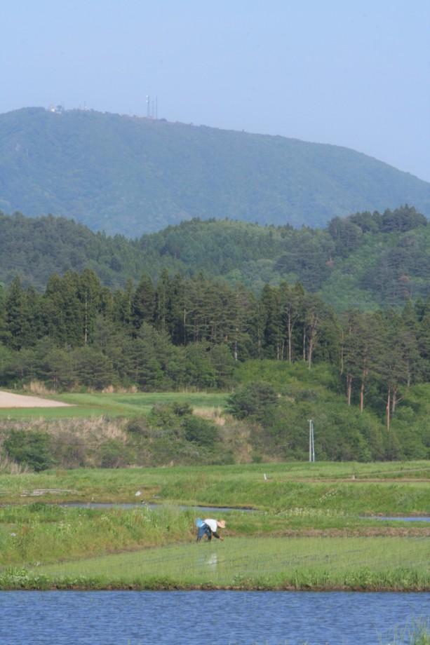 矢大臣山と田植え