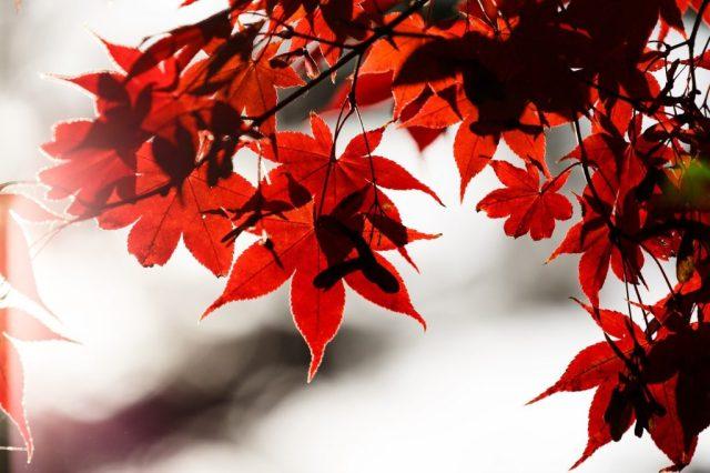 9月と秋のレクリエーション