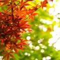 木へんに花で椛