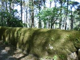 Stone wall hidden under grass, now that's a costume!