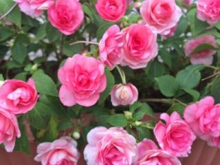 Flower_320x240