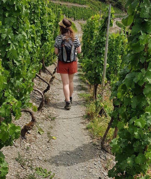 Wijngaarden Ahr Duitsland