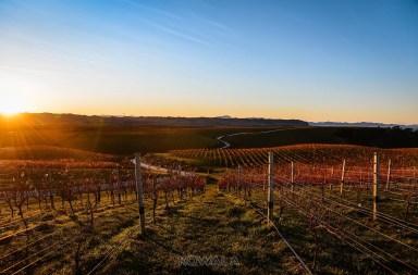 pvt australie working holiday visa backpacker voyage travel whv vignes vignoble raisin vin coucher de soleil vineyard winery