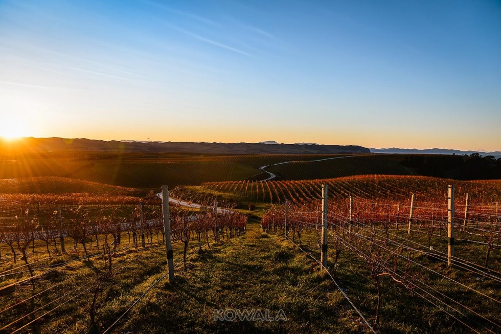 pvt australie working holiday visa backpacker voyage travel whv vignes vignoble raisin vin coucher de soleil vineyard winery