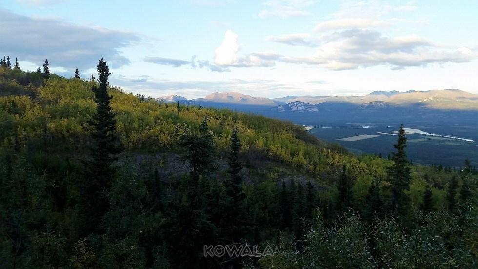 les couleurs jaune de l'automne au Yukon