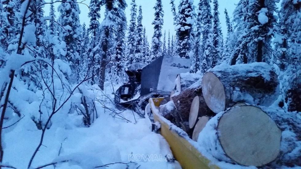 volontariat de bûcheron au Yukon