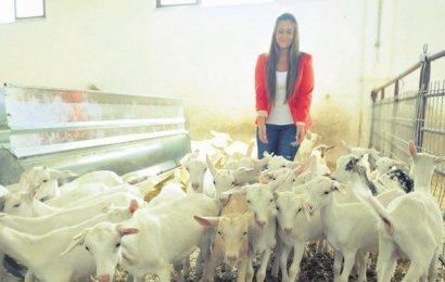 1500 Keçilik Çiftliği Var
