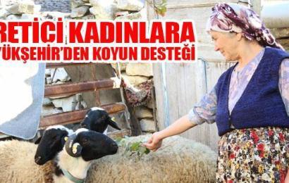 Üretici Kadınlara Büyükşehir'den Koyun Desteği
