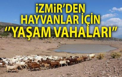 """İzmir'den Hayvanlar İçin """"Yaşam Vahaları"""""""