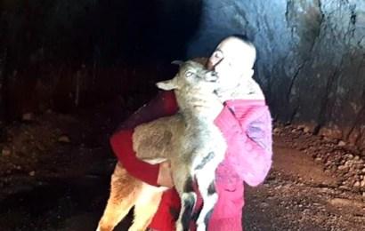 Yaban Keçisi Yavrusunu Sevmeye Doyamadılar