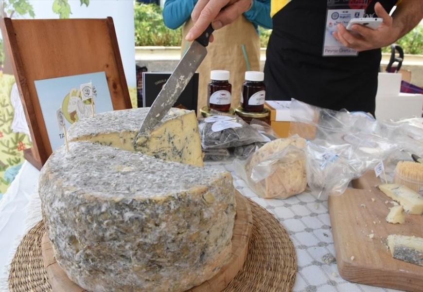 Bodrum'da Uluslararası Peynir Festivali Başladı