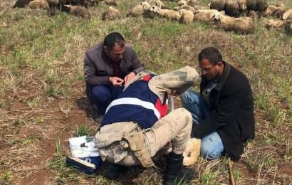Jandarmadan Yaralı Çoban Köpeğine Şefkat Eli