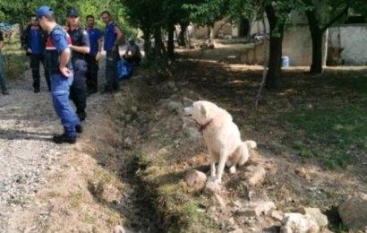 Kayıp Çoban, Köpeğinin Kenarında Havladığı Gölette Ölü Bulundu