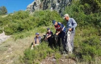 Uçurum Kenarında 6 Gündür Mahsur Kalan 2 Keçi Kurtarıldı