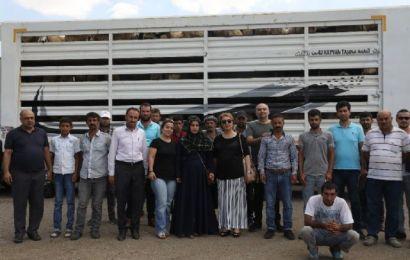Diyarbakırlı Çiftçilere 986 Küçükbaş Hayvan Dağıtıldı