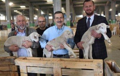 Eskişehir Çoban Festivali Sona Erdi