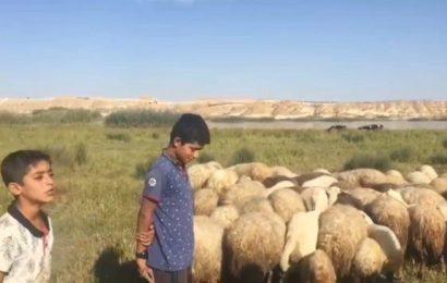 Antep'te Küçük Çobanlardan Barış Pınarı Harekatı'na Destek