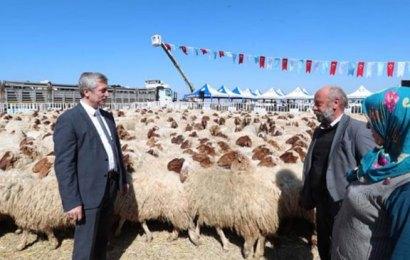 243 aileye yüzde 100 hibeli hayvancılık desteği