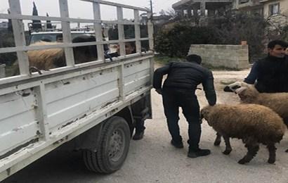 Hatay'da küçükbaş hayvan hırsızlığı iddiasıyla 7 kişi yakalandı
