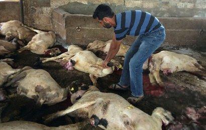 Hayvanlar telef oldu, sahipleri ölümden döndü