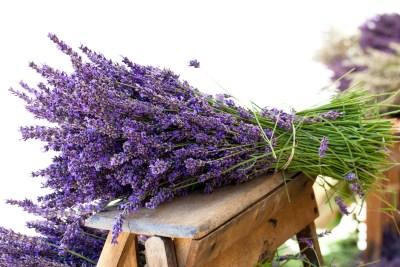 come-coltivare-lavanda-vaso-giardino2
