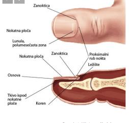 Bolesti noktiju