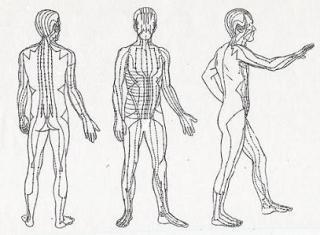 MERIDIJANI U LJUDSKOM ORGANIZMU – tačke koje odgovaraju glavnim unutrašnjim organima
