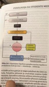 Slika 1. Hipotalamo-hipofizno-gonadna osovina reguliše reproduktivne funkcije