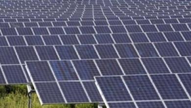 Photo of Több naplopóra lenne szükség országunkban