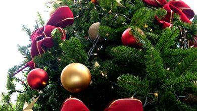 Photo of A karácsonyfa újrahasznosítása