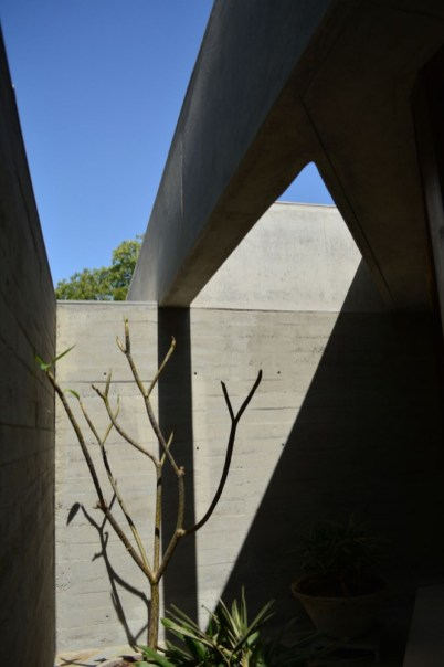 Concrete-And-Tree