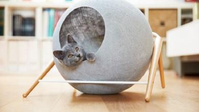Photo of Stílusos macska fekhely modern otthonokba