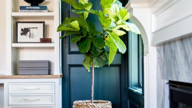Photo of Növények a lakásban stílusosan