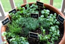 Photo of Beltéri gyógy és fűszernövény kert kialakítása