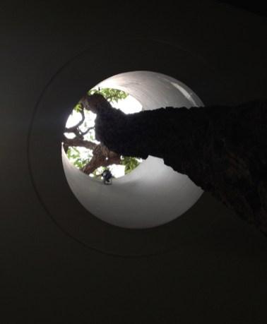S-House-lets-a-tree-run-through-it