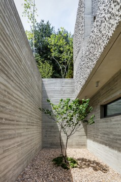 The-Fade-house-has-a-lovely-courtyard-space-with-a-small-tree