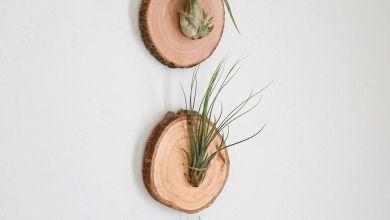 Photo of 14 kreatív élőnövény dekoráció