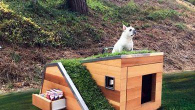 Photo of Minden kiskutya álma: modern kutyaház funkcionális zöld tetővel