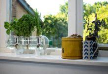"""Photo of A """"Bottle Farm"""" készlettel a használt műanyag palackokat beltéri kertekké alakíthatod"""