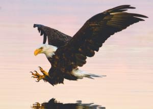 Bald Eagle Landing Lake