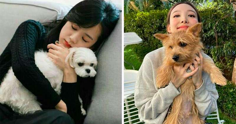 TOP Female Idol People Want to Walk a Dog With