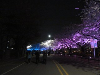 And if white isn't beautiful enough, spot lights turn them into every color.