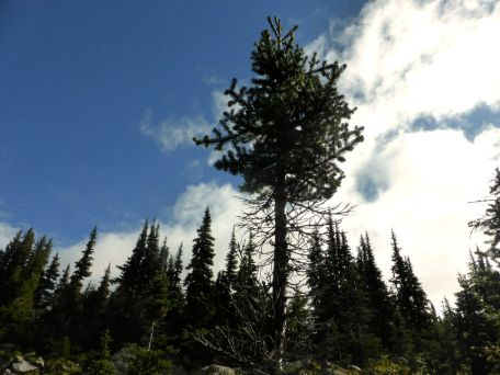 alpine-trail3