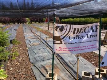 Kauai Coffee has decaf coffee trees!
