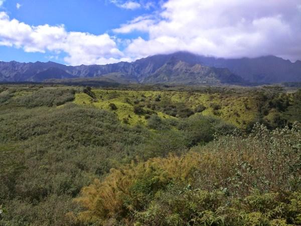 Hawaii Landscape 1