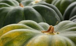 pumpkin-843934_1280