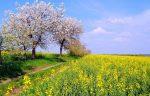 Артур Рембо - Мајски знамиња