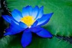 Верувај ѝ на љубовта - Рабиндранат Тагоре