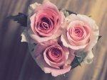 Поучна приказна: Разлика помеѓу љубовта и бракот